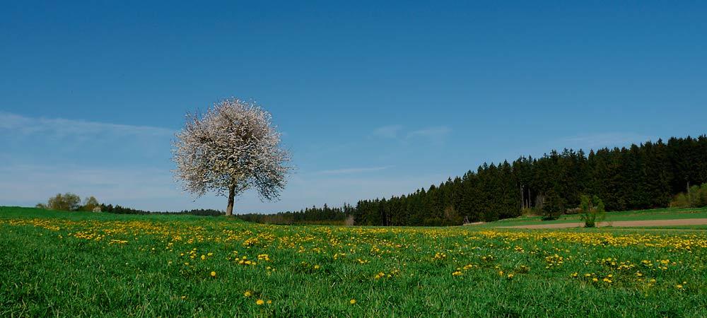 Kinderbauernhof Zeilinger Kirschbaum - Foto: Thomas Reicher