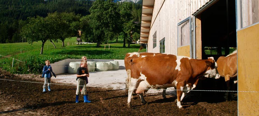 Ein Tag am Bauernhof im Zeitraffer