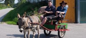 Ausfahrt mit dem Esel-Sulky in Hanerau-Hademarschen